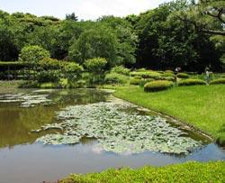 Giardini imperiali a Tokyo